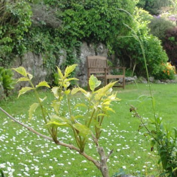 Chalet gardens - Bottom lawn level